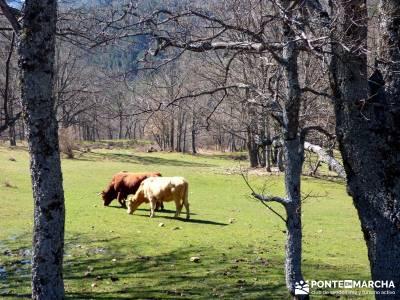 Molinos Hiruela; licencia montaña; senderismo cerca de madrid; grupo de senderismo;marcha de san se